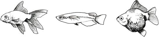 金魚・メダカ